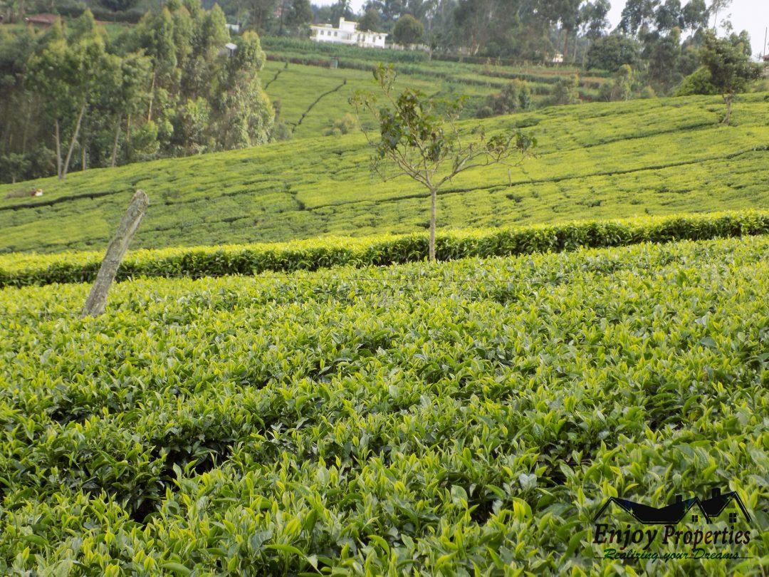 Kangari Town 2.1 Acres tea farm For sale @5m neg