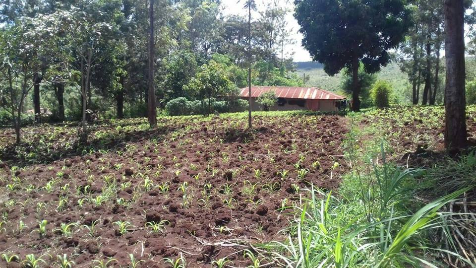 Saba saba, Muranga 1.9 acres for sale 1.5km off the tarmac kes2m